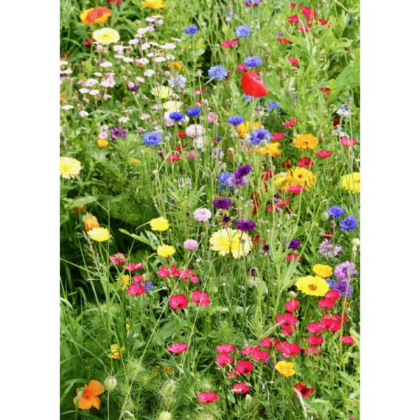 Greetings card with photograph of bright wildflowers in green grasses