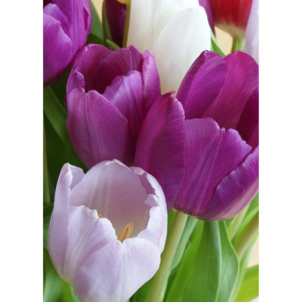 Front of double view greetings card with photo of purple tulips