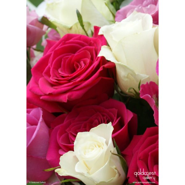 Back of greeting card with wrap-around image of pink and white rose bouquet