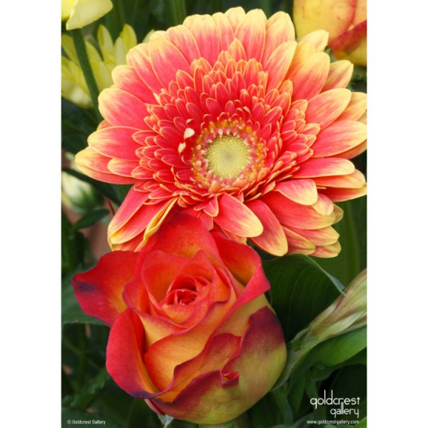 Back of greetings card with photo of red and orange rose bloom and chrysanthemum