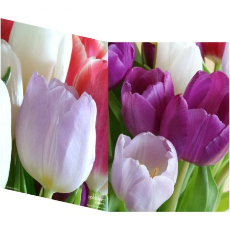 Two sides of a folded greeting card showing two views of a tulip bouquet