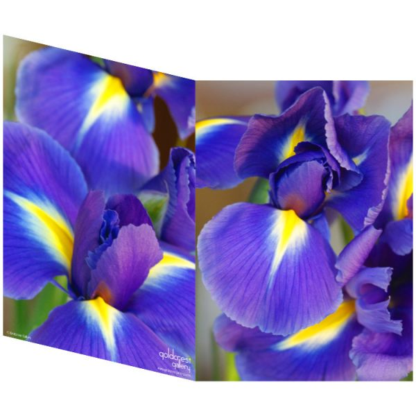 Two sides of a folded greeting card showing two close up photos of purple irises