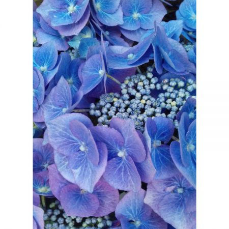 Fine art greetings card with close-up photograph of bright blue hydrangea flowers
