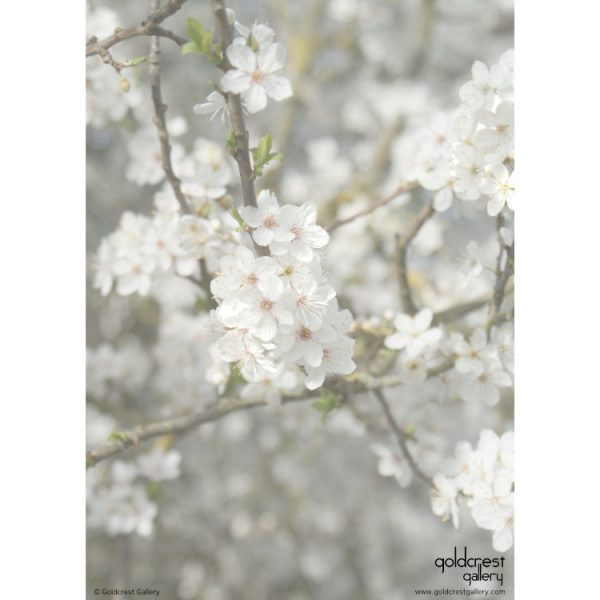Reverse of greetings card with close up photo of white blossom flowers